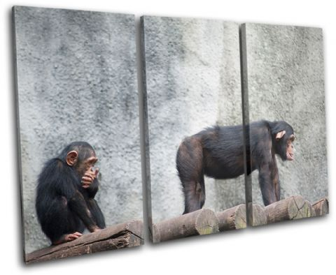 Chimpanzee funny Animals - 13-0310(00B)-TR32-LO
